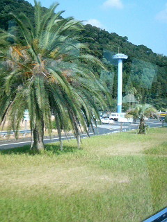 Palm tree in Kagoshima Prefecture