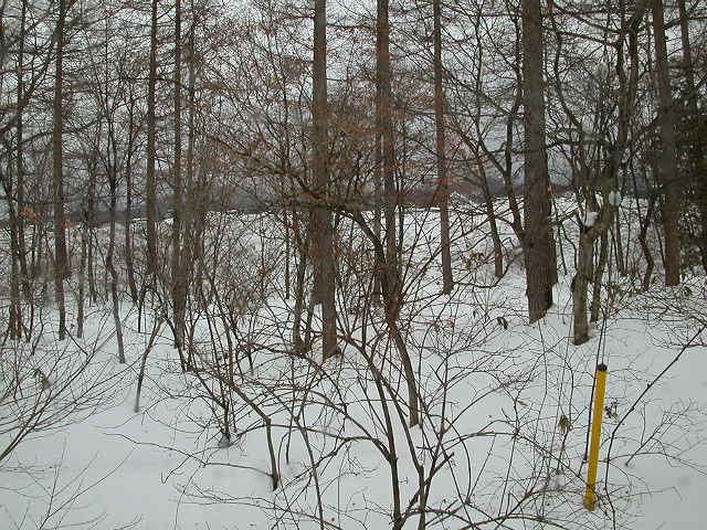 Snow woods of Tochigi Japan (north of Tokyo)